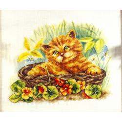 Kit Chat dans panier